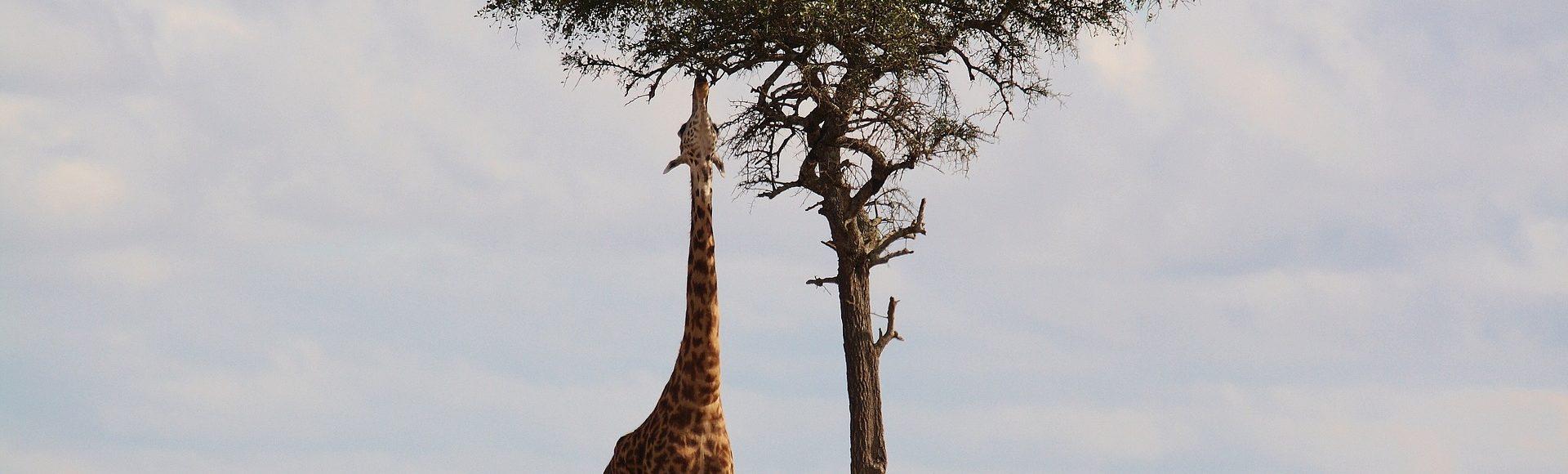 Csak az érdekel, hogy magassarkút hordhassak!!! – Hentes APP tapasztalatok